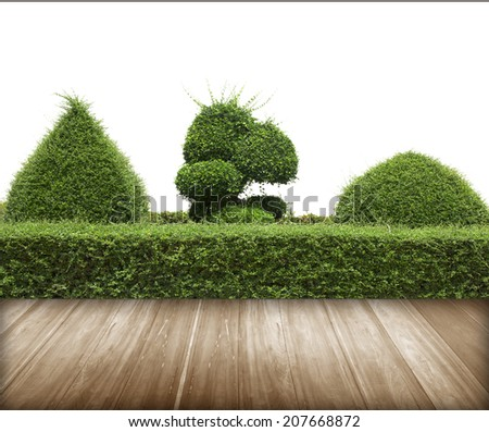 Green bush with wall isolated on white background and flooring wood. - stock photo