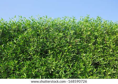 green bushes - stock photo