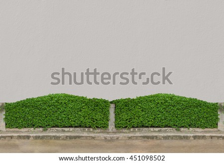Green Bushes fences at white concrete wall  floor at walk way  - stock photo
