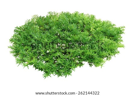 Green Bushes Stock Images, Royalty-Free Images & Vectors ...