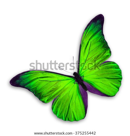 Green Butterfly flying, isolated on white background - stock photo