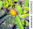 green cactus leave in detail with snail - stock photo