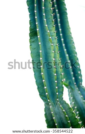Green Cactus. Succulent. Macro view with thorn - stock photo