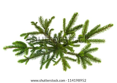 Green Christmas tree isolated on white - stock photo