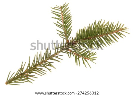 Green christmas tree outfit. White background. Holiday mood. - stock photo