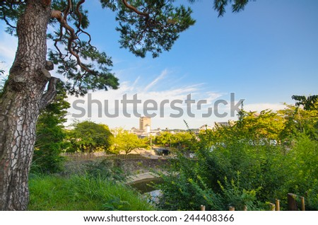 Green city park with pinus trees against blue sky. Beautiful in summer landscape - stock photo
