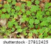Green clover background. - stock photo