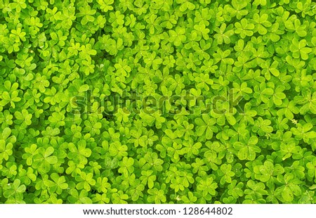 green clover background with micro water drops - stock photo