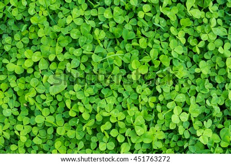 green clover grass texture view from above (top view) - stock photo