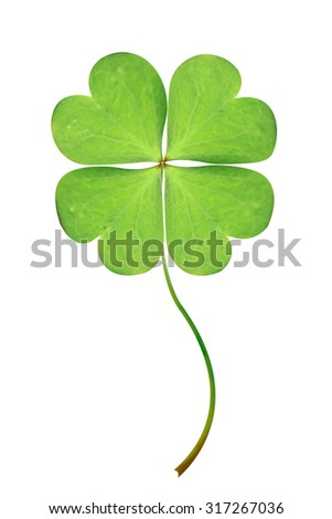 Green clover leaf isolated on white background. This has clipping path. - stock photo