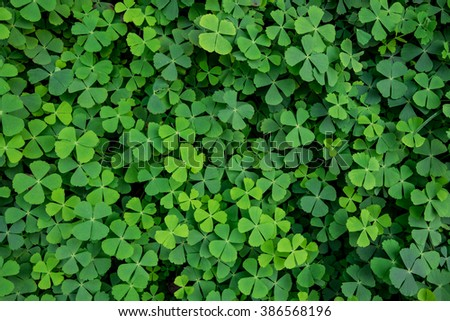 green clover leaves background - stock photo