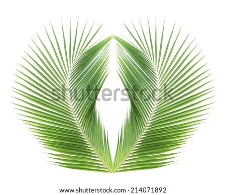 Green coconut leaf frame isolated on white background - stock photo