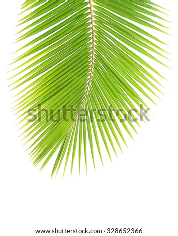 Green coconut leaf isolated on white background - stock photo