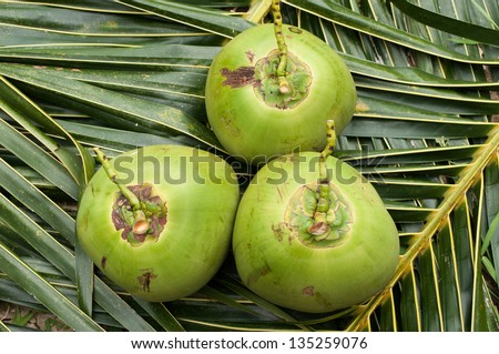 Green coconut on a palm leaf background - stock photo