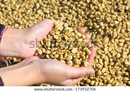 Green Coffee Bean in girl hands - stock photo