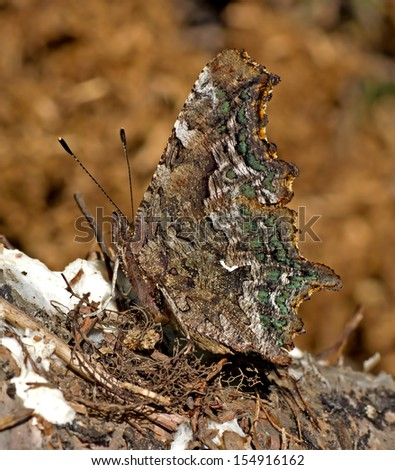 Green Comma  - stock photo