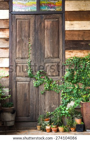 Green corner of a house with wooden wall and door having a green creeper plant and flower pots on the ground - stock photo
