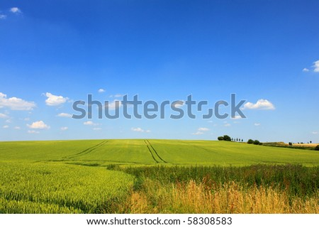 green cornfield blue sky and clouds