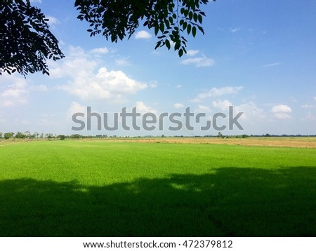 Green cornfield with clouds blue sky