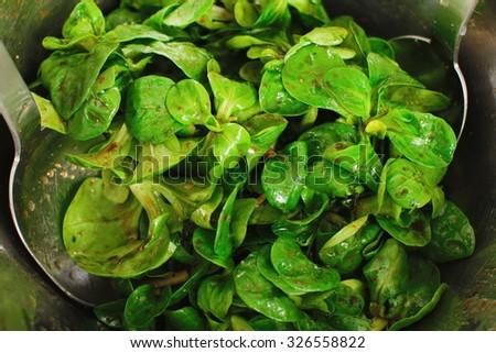 Green cornsalad mache salad lettuce field corn - stock photo