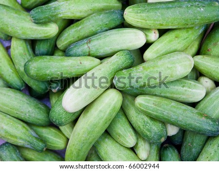 green cucumber background