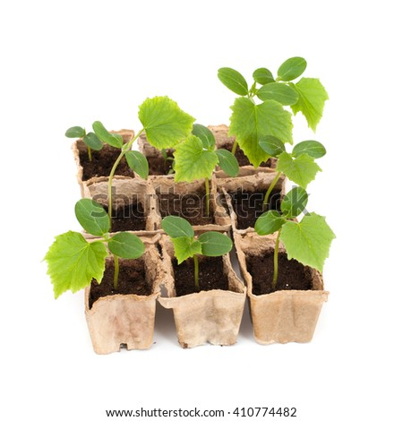 green cucumber's sprouts in peat pots