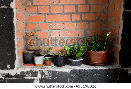 Green decorative plant near brickie wall, rustic home interior decor with copy space. - stock photo