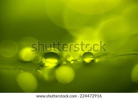 green dew background  bokeh drops - stock photo