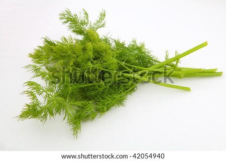 green dill - stock photo