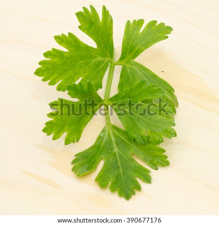 green dill on a wooden cutting board