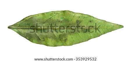 Green dry leaf on a white background