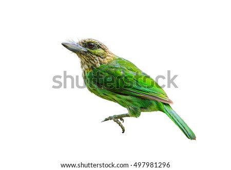 Green-eared Barbet(Megalaima faiostricta), Beautiful bird isolated with white background,Kaeng kra cha National park,Thailand
