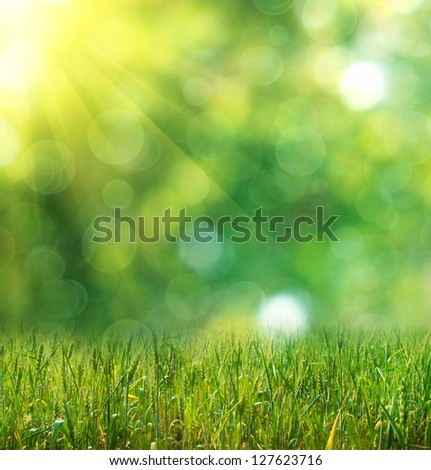green ears of wheat on defocused light green background - stock photo