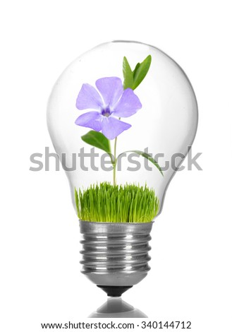 Green eco energy concept. Flower growing inside light bulb, isolated on white - stock photo