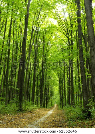 Green enchanted forest path - stock photo