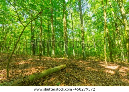 Green european wild forest in summer. Debowa Gora nature reserve in Poland.