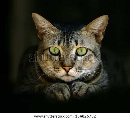 green-eyed cat in hideout with dark background. - stock photo