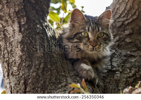 green-eyed cat on tree - stock photo