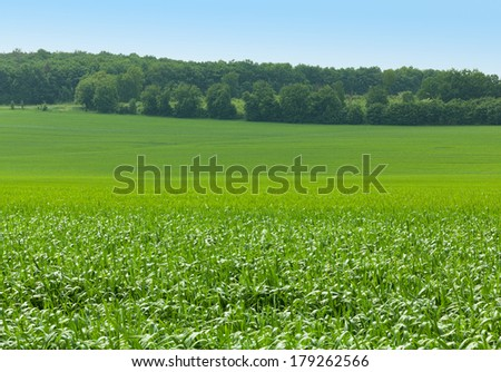 Green farm fields at springtime