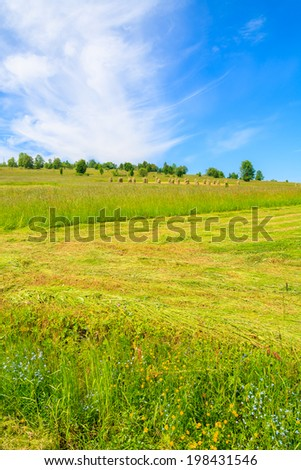 Green farming field in summer landscape on sunny day, Podhale, Tatra Mountains, Poland