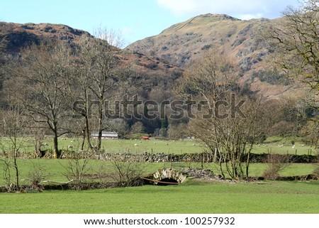 Green farmland in winter in the English Lake District. - stock photo