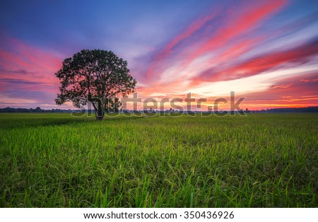 Green farmland paddy field landscape with red sunset in Malacca, Malaysia - stock photo