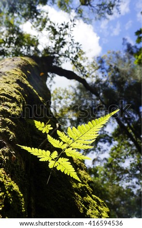 Green fern growing in forest - stock photo