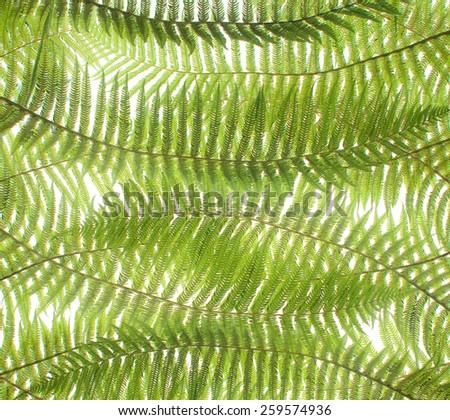 green fern leaf - stock photo