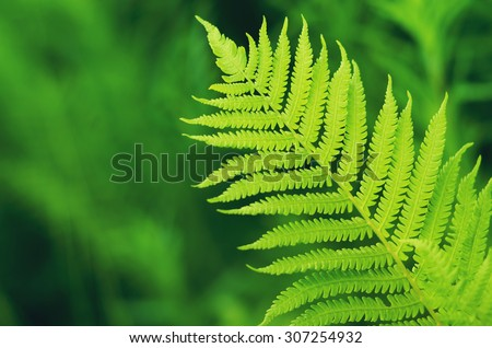 green fern leaf on de focused forest background