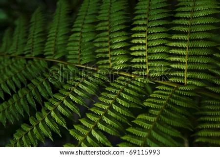 Green fern leaf with nice lighting - stock photo