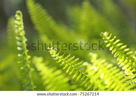 Green Fern Leaves Background - stock photo