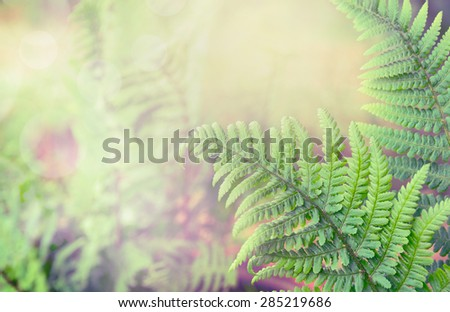 Green fern leaves on blurred nature background, toned - stock photo