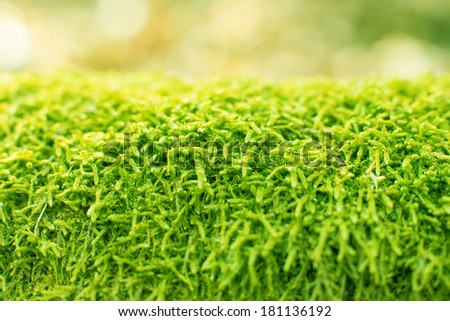 Green fern moss as a background - stock photo