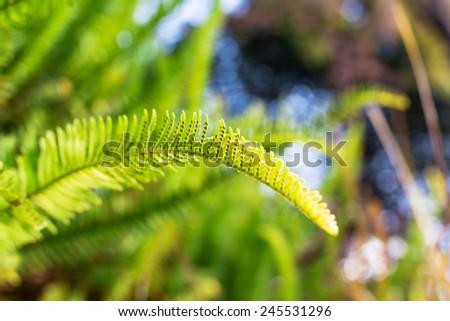 Green Fern plant in garden - stock photo